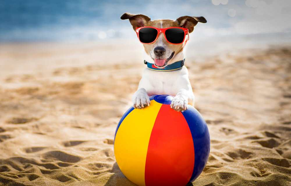 Cuccioli in spiaggia? La Puglia dice SI!