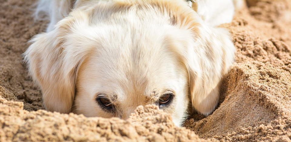 Cani in spiaggia: le spiagge pet friendly in Puglia