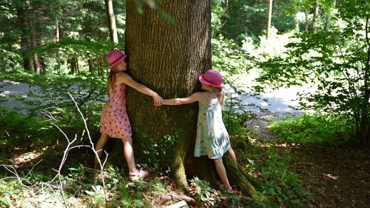 """Gli alberi monumentali della Puglia e i benefici del """"tree hugging"""""""