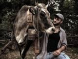 """Michele Totaro, pastore youtuber di Vico del Gargano: """"I social aiutano a far conoscere il mio mestiere"""""""