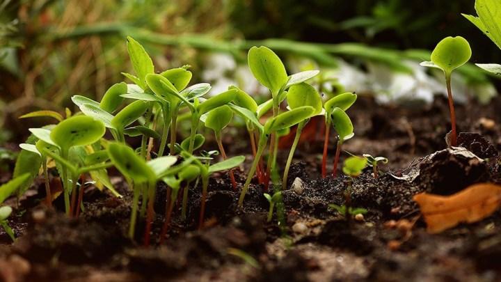 Corso di Permacultura e Valorizzazione dei Giardini scolastici per docenti: in modalità online dal 5 Dicembre
