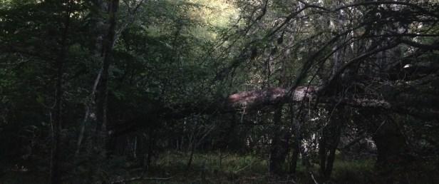 Vilforcos, Valle de Las Arregadas