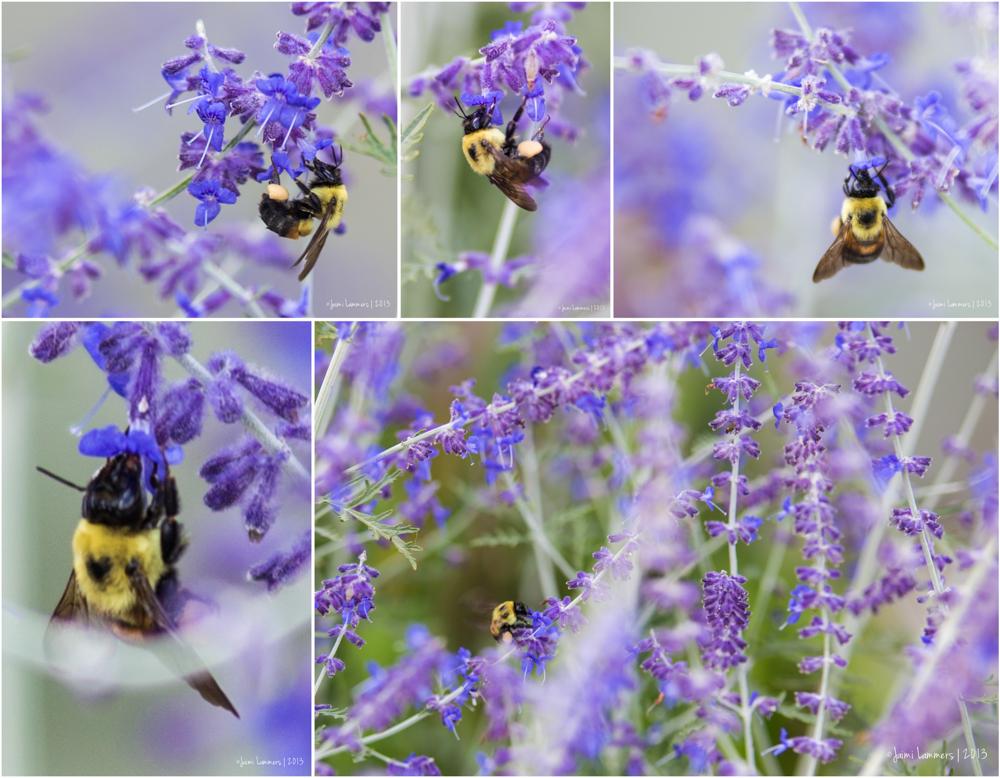 BeeBoard-