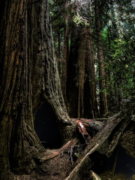Hobbit Hole at Muir Woods