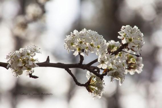 Spring Tree Bloom