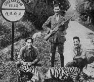 The last tiger was shot in 1930 in Choa Chu Kang