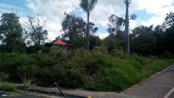 El monte se ha apoderado de los diversos ambientes del Parque Metropolitano de San Cristóbal (Foto: Armando Hernández)