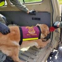 Privan de libertad a sargentos del Ejército que desde Coloncito transportaban cocaína