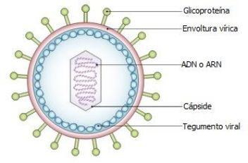 que caracteristicas hacen pensar que los virus son seres vivos