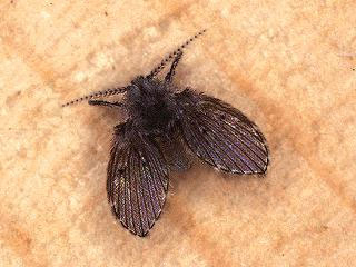 how to get rid of small brown moths in house
