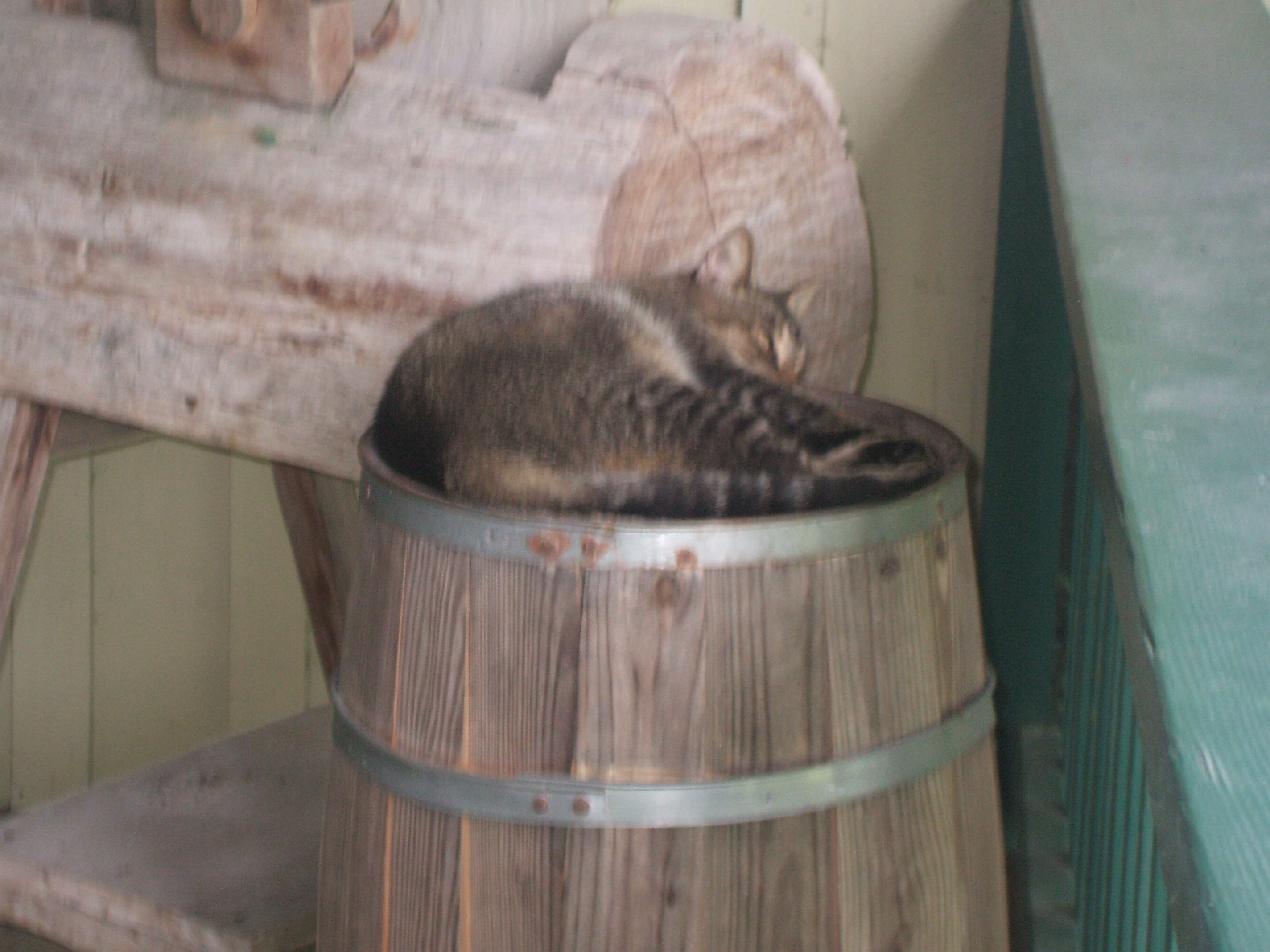 "Some of Florida's ""Not-So-Wildlife"" Enjoys a Nap on a Barrel"