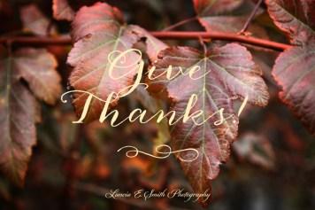 Give thanks! - Autumn Ninebark leaves