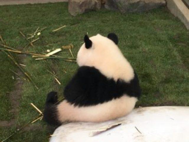 不動産探し、悩んだらこれ。パンダとコアラの比較論理学