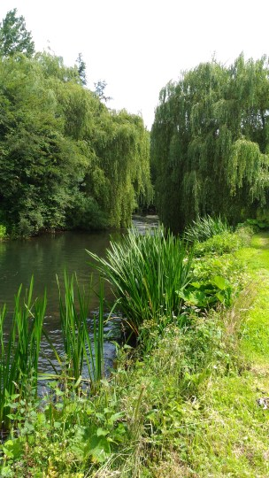 the-river-loddon