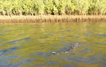 Mooball Creek