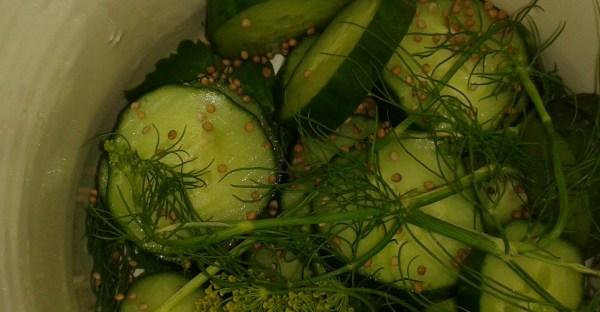 Schnelle Gewürz-Honig-Gurken