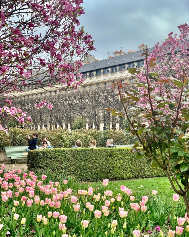 Full mid-March blooms at the Palais Royal