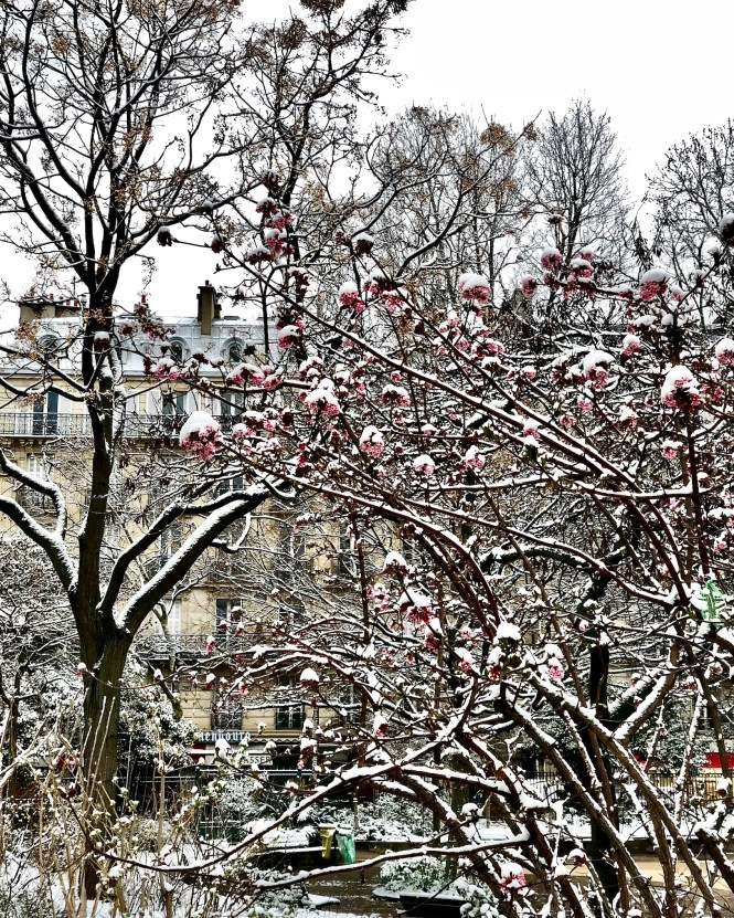 Snow covering the flowers at Square Boucicaut