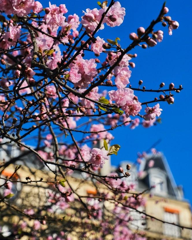 February Blooms in Paris
