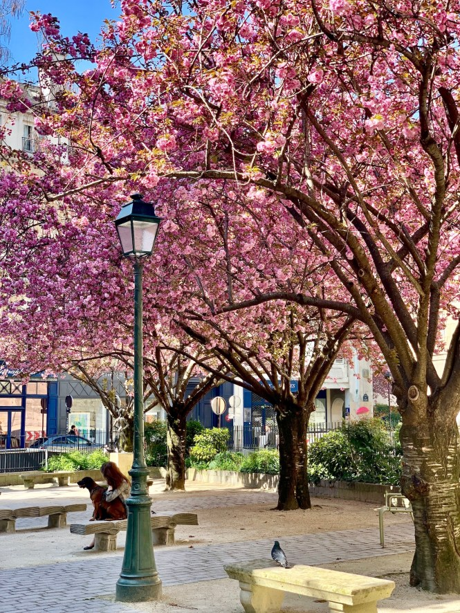 April in Paris Cherry Blossom trees Valentine's Day Gift Ideas for Francophiles