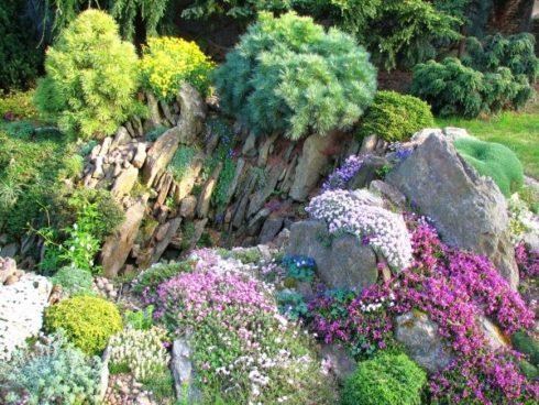 Альпийская горка: создание и выбор растений для цветника