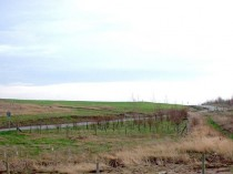 A Restored Landfill with Young Planting
