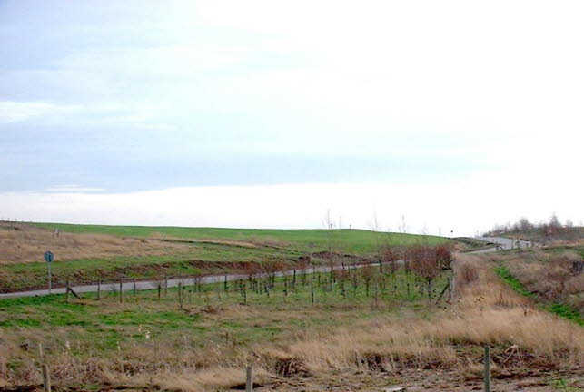 restored landfill with new planting