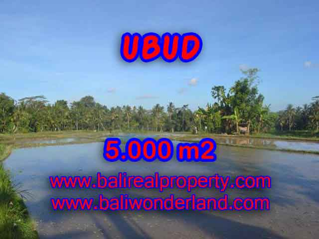 Land for sale in Ubud Bali, Unbelievable view in Ubud Payangan – TJUB413