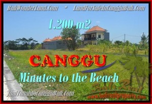 Magnificent PROPERTY Canggu Kayutulang BALI LAND FOR SALE TJCG166