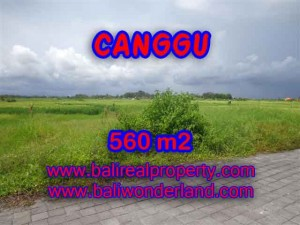 Affordable 560 m2 LAND IN CANGGU FOR SALE TJCG138