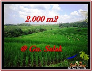 FOR SALE Magnificent LAND IN Tabanan Selemadeg BALI TJTB227