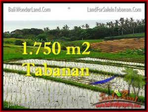 FOR SALE Exotic PROPERTY 1,775 m2 LAND IN TABANAN BALI TJTB264
