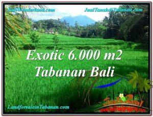 Beautiful TABANAN BALI 6,000 m2 LAND FOR SALE TJTB306