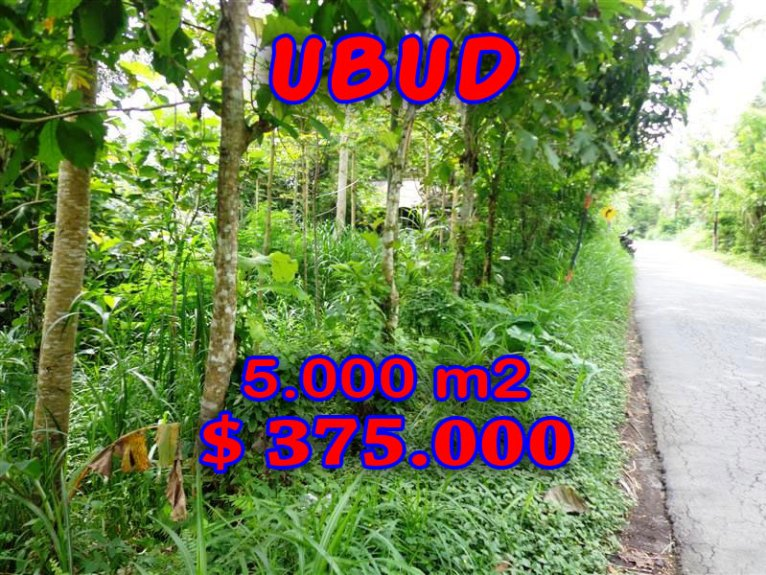 Land for sale in Ubud 50 Ares in with by the river valley