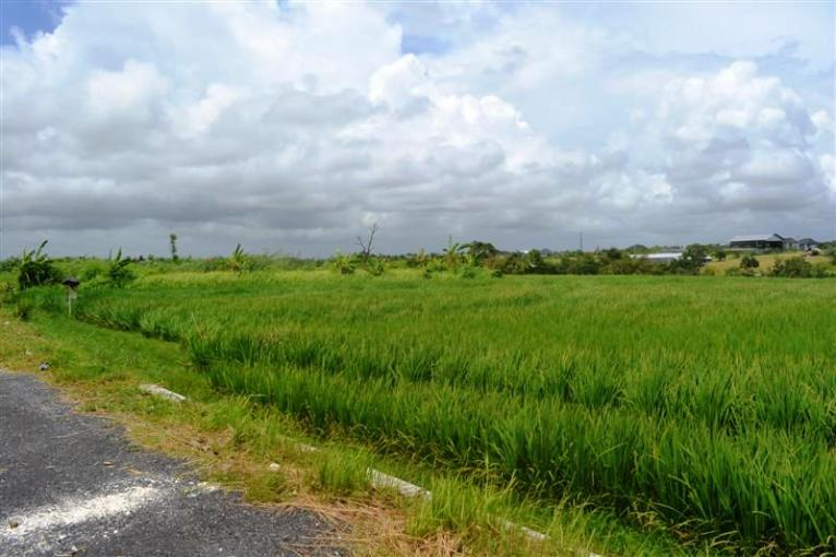 Land in Canggu Bali For sale 1.730 sqm in Canggu Echo Beach