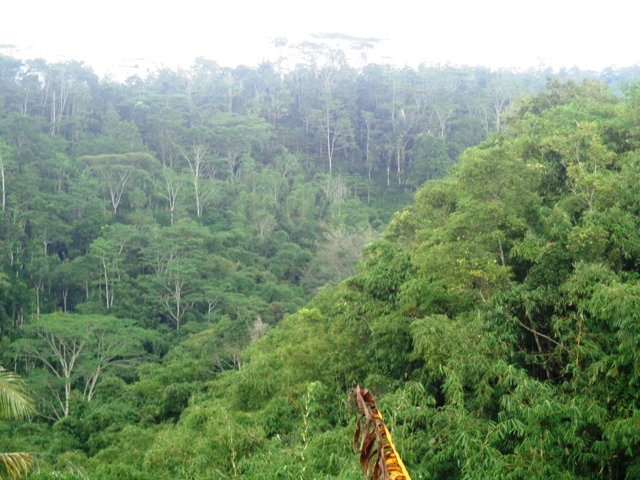 Land for sale in Ubud Bali 1,700 m2 Stunning by the river valley