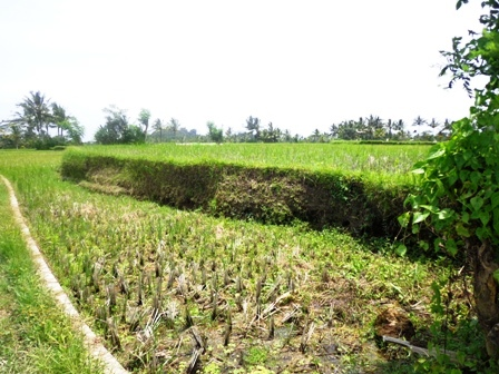 Land for sale in Ubud Bali  nice view in Ubud Pejeng