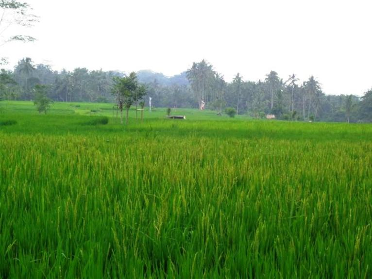 Land for sale in Ubud Bali – TJUB204 By the roadside
