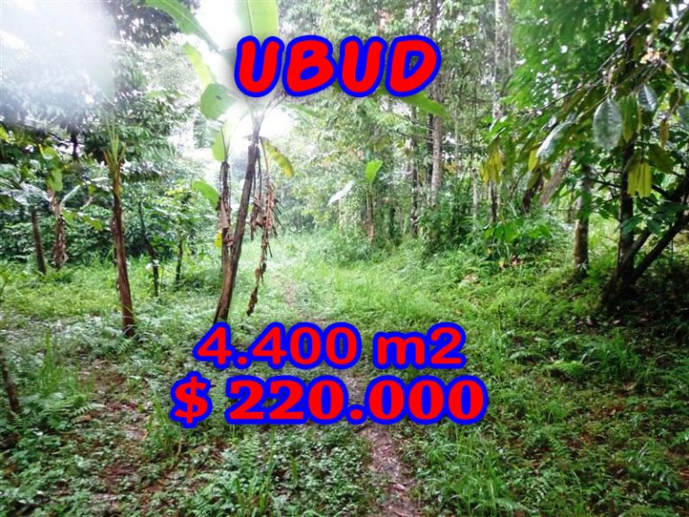 Affordable 4.400 m2 Land in Ubud Bali For sale