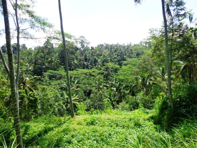 Bali Land for sale 4.000 sqm in Ubud Tegalalang
