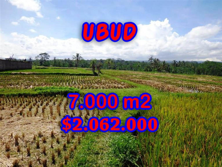 Amazing Land in Bali for sale in Ubud Central Bali – TJUB247