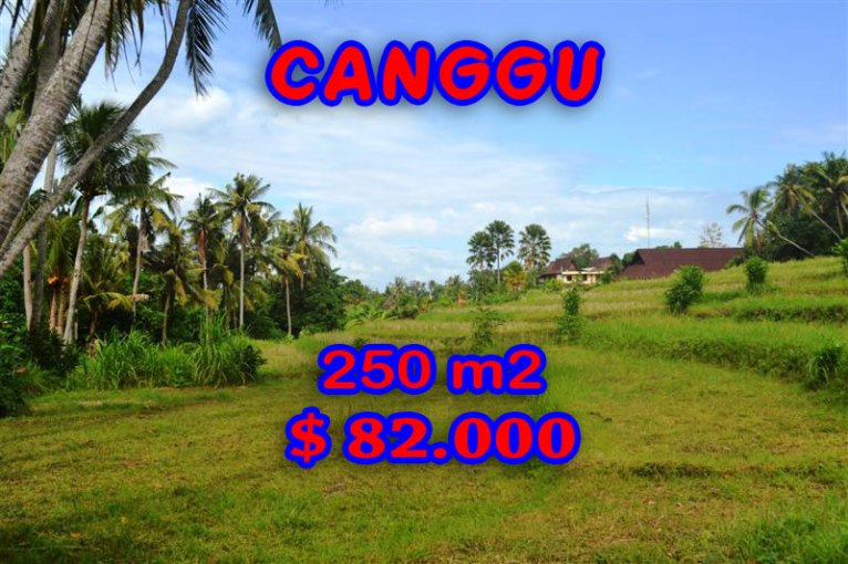 Land for sale in Bali, exceptional view in Canggu Pererenan – TJCG115