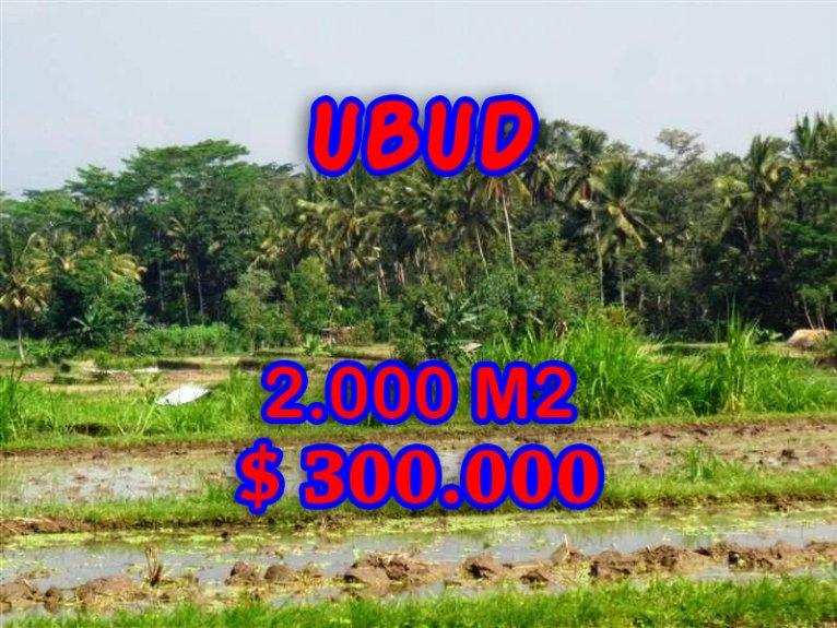 Amazing Land in Bali for sale in Ubud Tampak siring Bali – TJUB267
