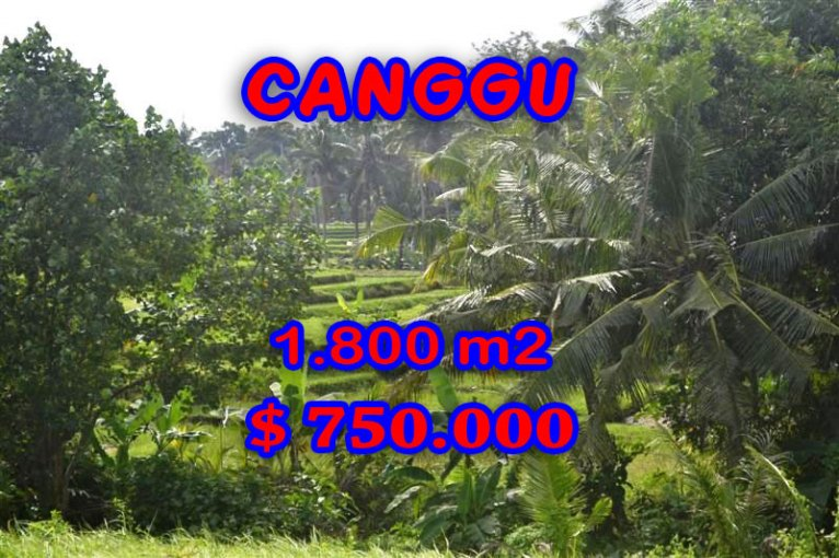 Exceptional Property in Bali, land in Canggu Bali for sale – TJCG111
