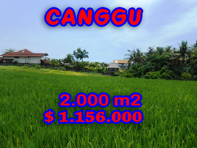 Exotic Land for sale in Bali Indonesia, Magnificent Rice fields view  in Canggu Pererenan – TJCG093