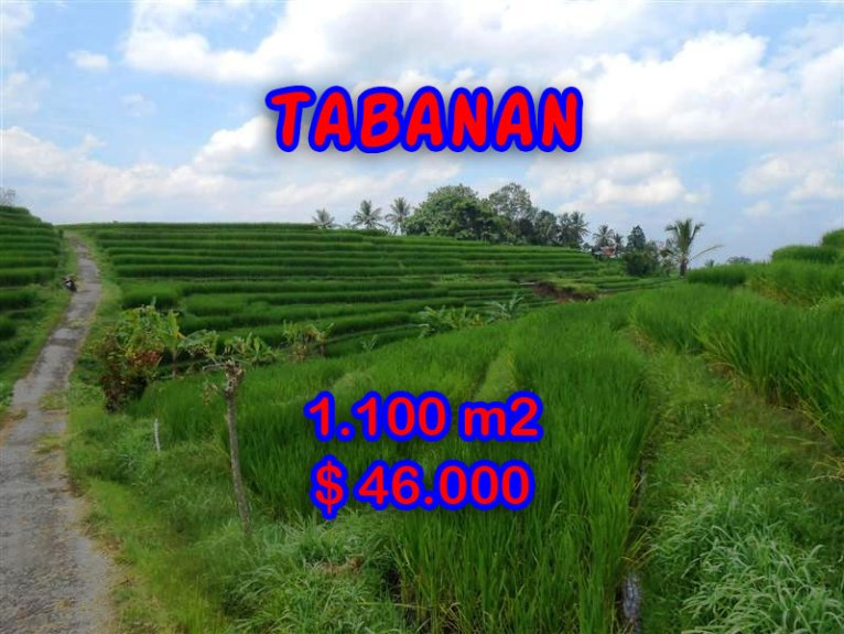 Wonderful Land for sale in Bali, Terraced rice paddy view in Tabanan Bali – TJTB052