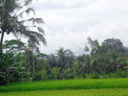TJUB257E - For sale land in Ubud Bali 15