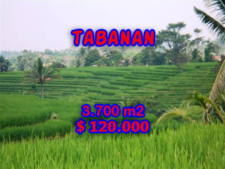 Land for sale in Bali, Exotic view in Tabanan Bali – TJTB051