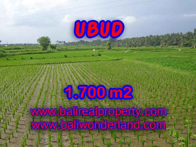 Land in Bali for sale, great view in Ubud Bali – TJUB398