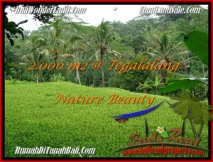Beautiful PROPERTY 2,000 m2 LAND FOR SALE IN Ubud Tegalalang TJUB490